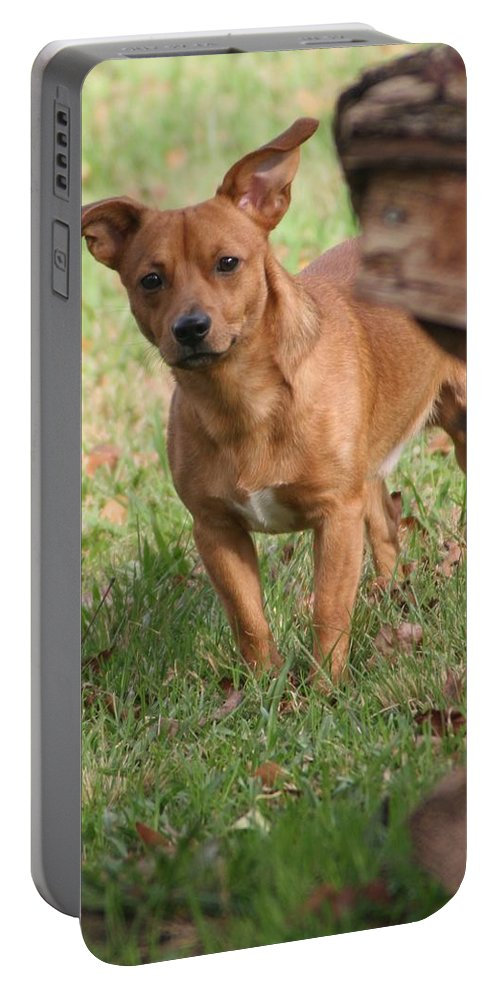 Dog Portable Battery Charger featuring the photograph I See You by John Glass
