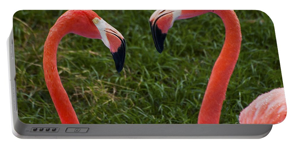 Flamingo Flamingos Bird Birds Animal Animals Creature Creatures Louisiana Purchase Gardens And Zoo Monroe Nature Portable Battery Charger featuring the photograph I Think I'm In Love by Bob Phillips