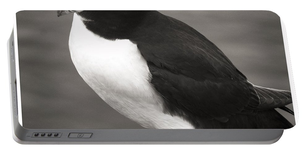 Iceland Portable Battery Charger featuring the photograph Iceland Puffin by For Ninety One Days