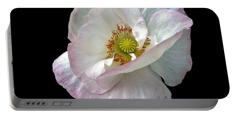Icelandic Poppy On Black Portable Battery Charger featuring the photograph Icelandic Poppy Version Two by Byron Varvarigos