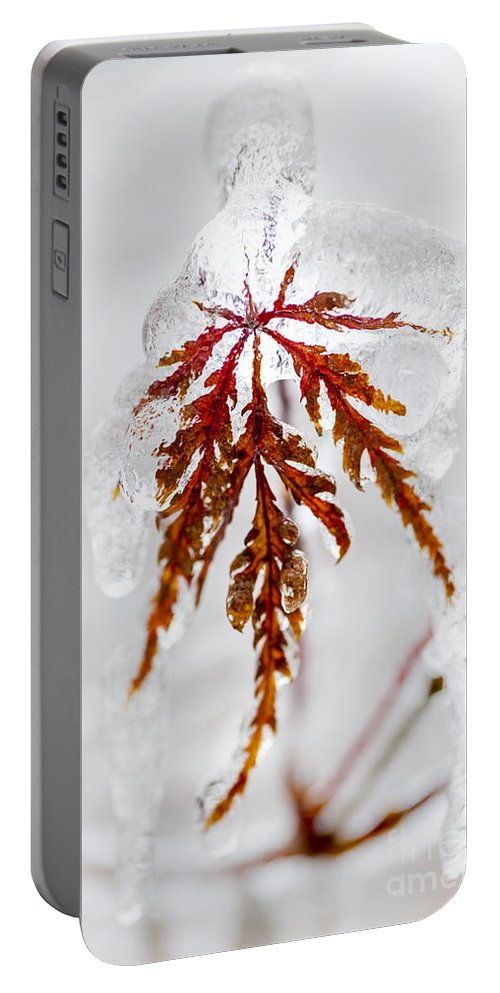 Leaf Portable Battery Charger featuring the photograph Icy Winter Leaf by Elena Elisseeva