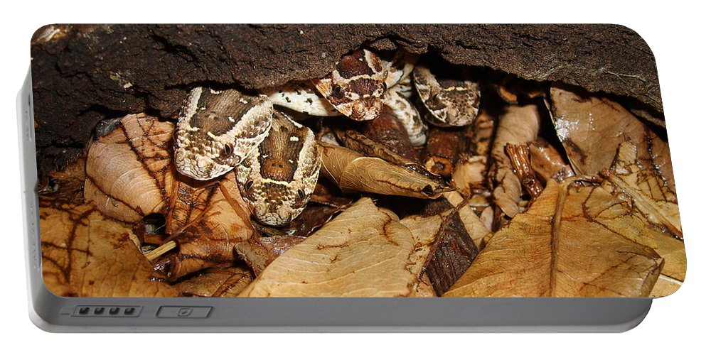 Puff Adder Portable Battery Charger featuring the photograph Identity Crisis Baby Puff Adders Bitis Arietans by Tracey Beer
