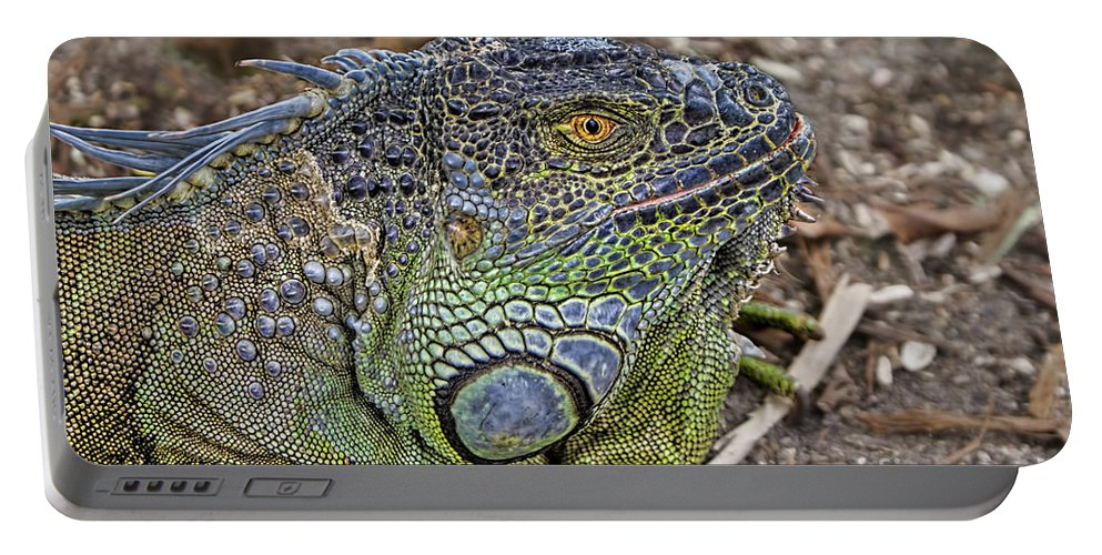 Iguana Portable Battery Charger featuring the photograph Iguana by Olga Hamilton