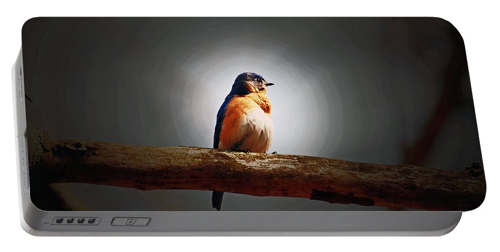 Bluebird Portable Battery Charger featuring the photograph I'm A Bluebird And I'm Beautiful by Lori Tambakis