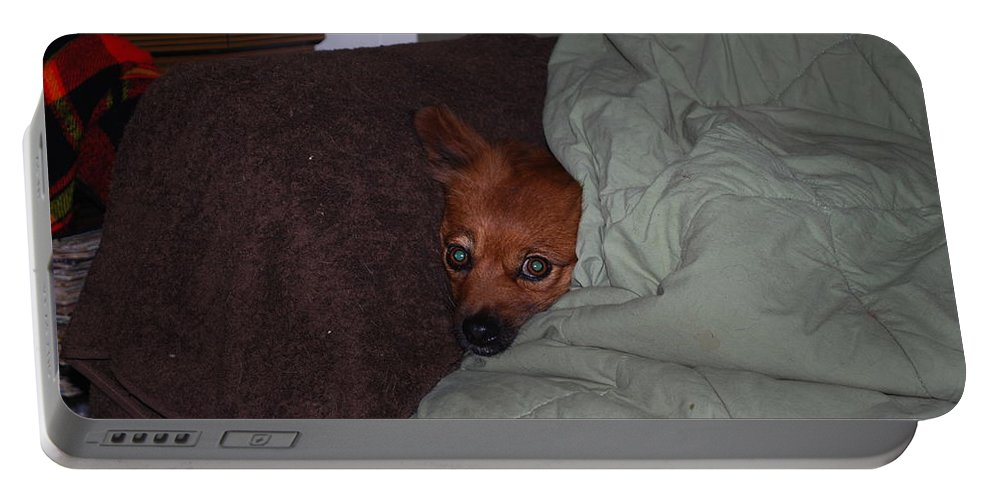 Foxy Under Cover Portable Battery Charger featuring the photograph I'm Cold by Robert Floyd
