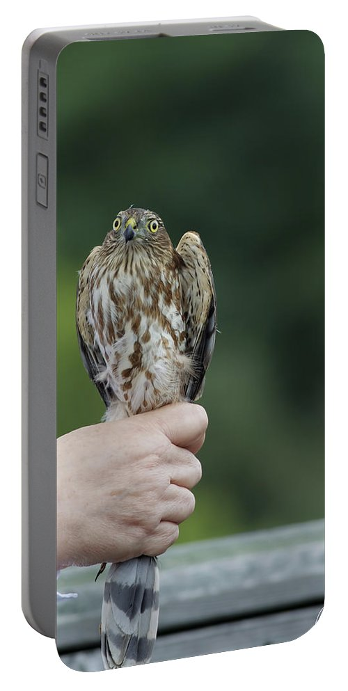 Accipiter Striatus Portable Battery Charger featuring the photograph I'm Not A Sno-cone by Phill Doherty
