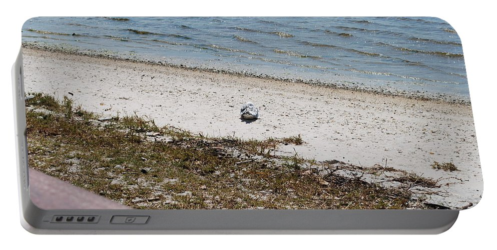 Seagull On Watch Portable Battery Charger featuring the photograph I'm Waching You by Robert Floyd