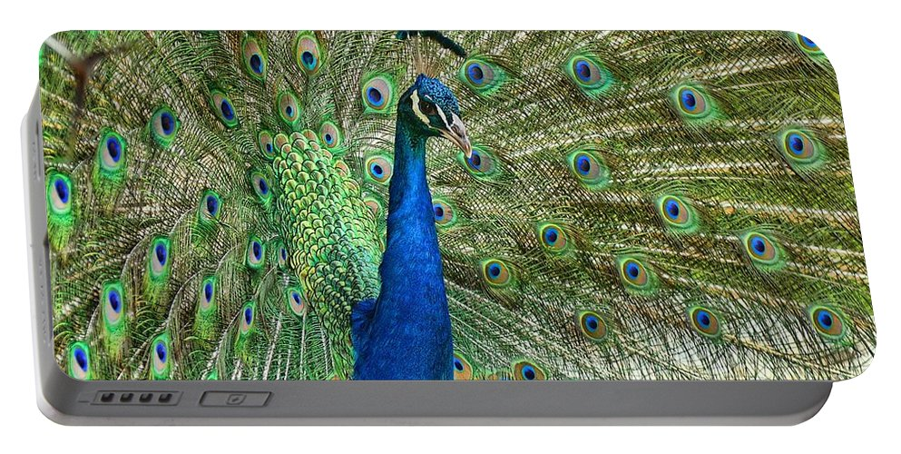 Peacock Portable Battery Charger featuring the photograph In Living Color by Peggy Hughes