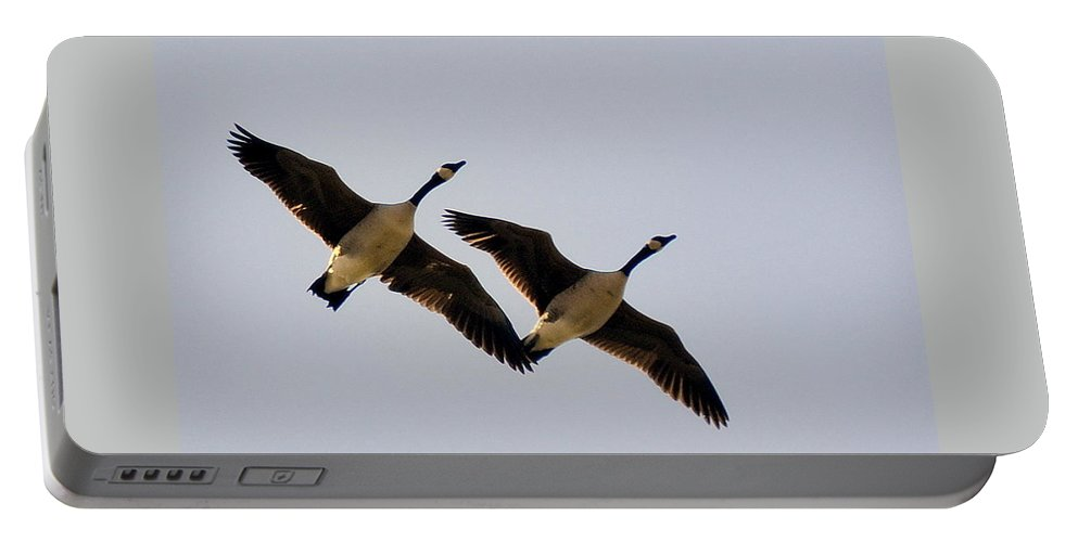 Birds Portable Battery Charger featuring the photograph In Tandem by AJ Schibig