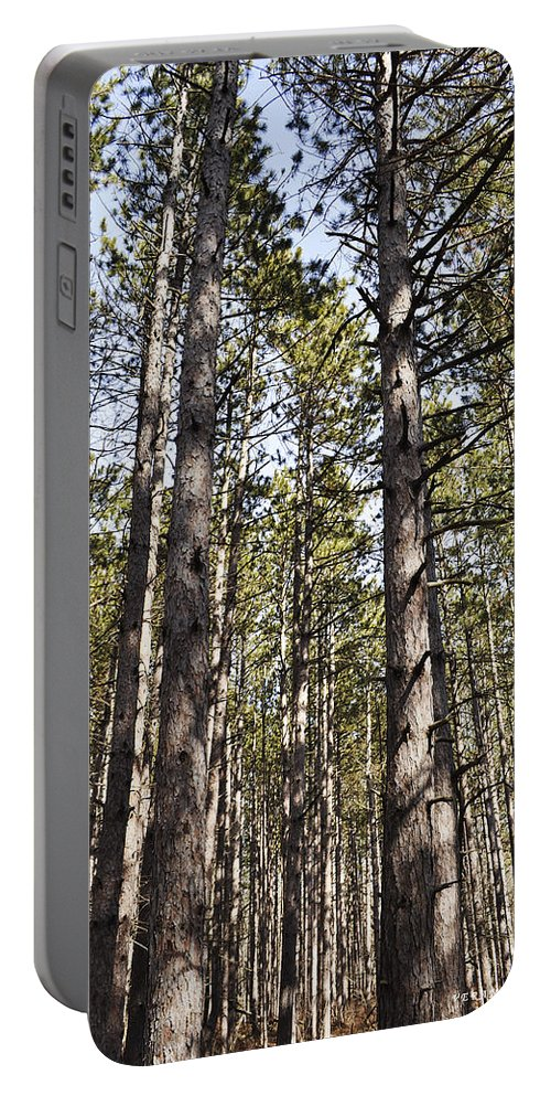 Forest Portable Battery Charger featuring the photograph In The Forest by Verana Stark
