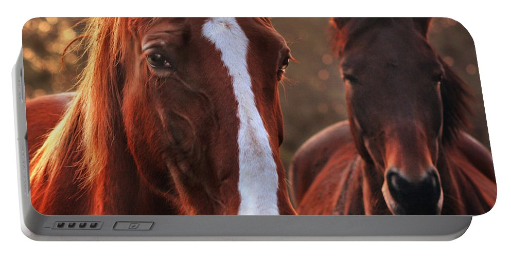 Sunset Portable Battery Charger featuring the photograph In The Last Rays Of The Sun by Angel Ciesniarska