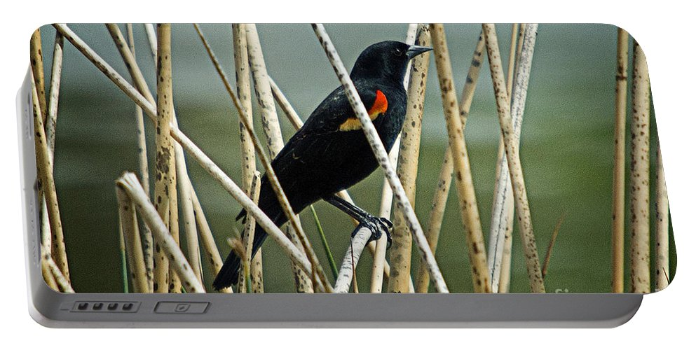 Birds Portable Battery Charger featuring the photograph In The Reeds by Bob Hislop