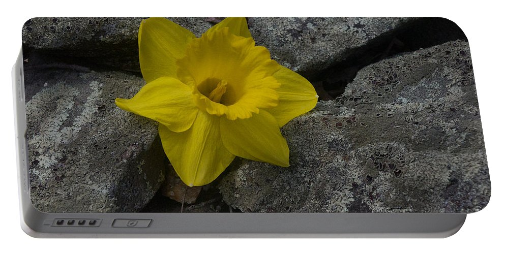 Daffodil Portable Battery Charger featuring the photograph In The Rocks by Ray Konopaske