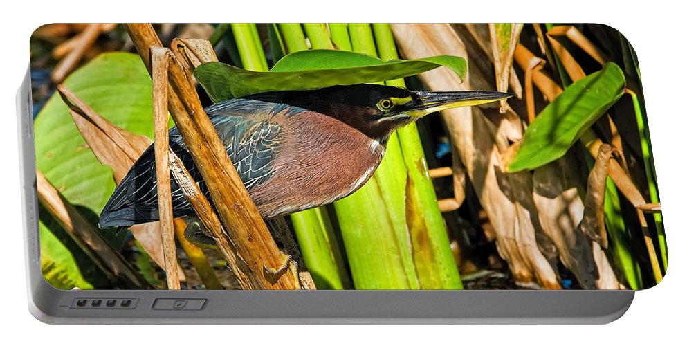 Little Green Heron Portable Battery Charger featuring the photograph In The Shade Little Green Heron by Timothy Flanigan
