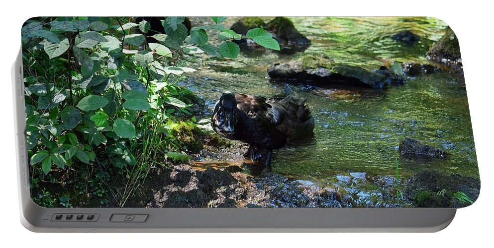 In The Shadows Of The Creek Portable Battery Charger featuring the photograph In The Shadows Of The Creek by Maria Urso