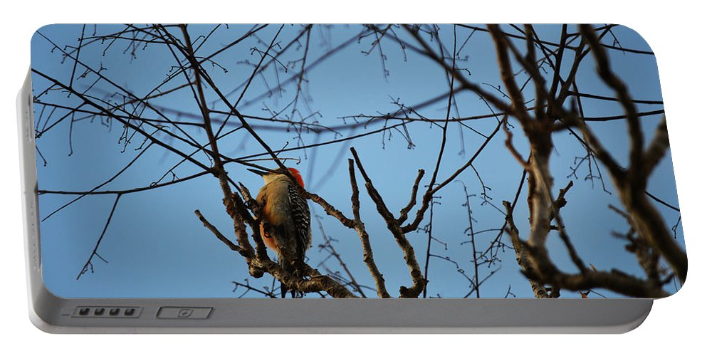 Florida Portable Battery Charger featuring the photograph In The Trees by Linda Kerkau