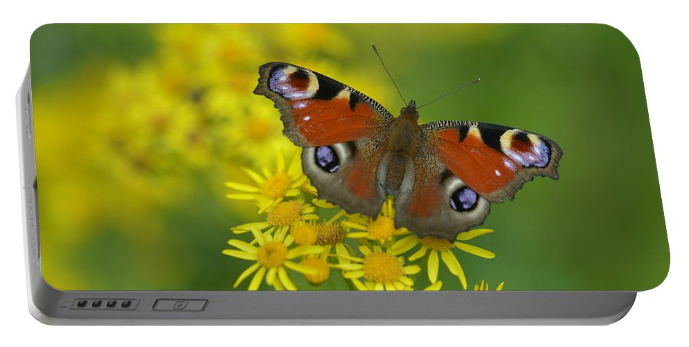 Meadow Portable Battery Charger featuring the photograph Inachis Io Butterfly On The Yellow Flowers by Jaroslaw Blaminsky