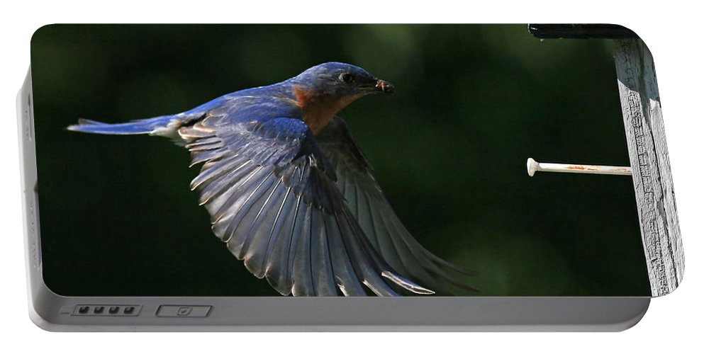 Bluebird Portable Battery Charger featuring the photograph Incoming by Douglas Stucky