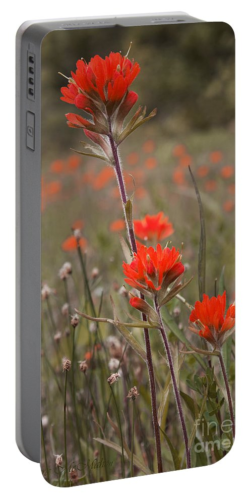 Garden Portable Battery Charger featuring the photograph Indian Paintbrush by Barbara McMahon