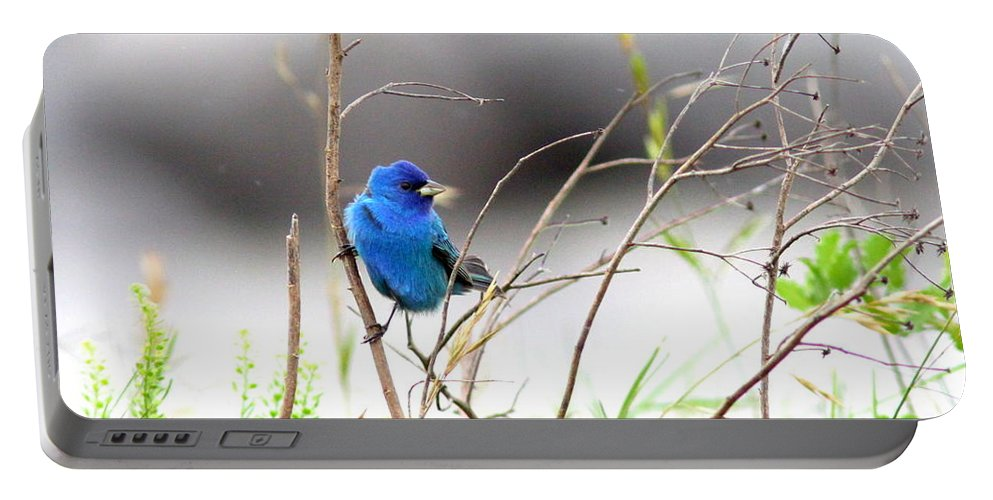 Indigo Bunting Portable Battery Charger featuring the photograph Indigo Bunting - 17 by Travis Truelove