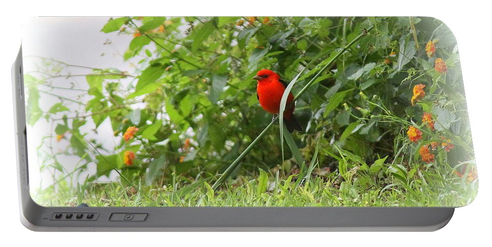 Indigo Bunting Portable Battery Charger featuring the photograph Indigo Bunting And Scarlet Tanager 2 by Travis Truelove