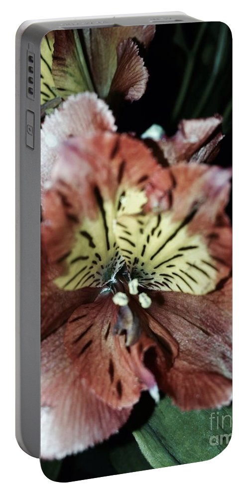 Flower Portable Battery Charger featuring the photograph Inner Floral Beauty by Christy Gendalia