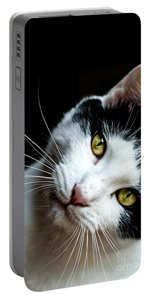Pet Portable Battery Charger featuring the photograph Inquisitive Kitty by Cheryl Baxter