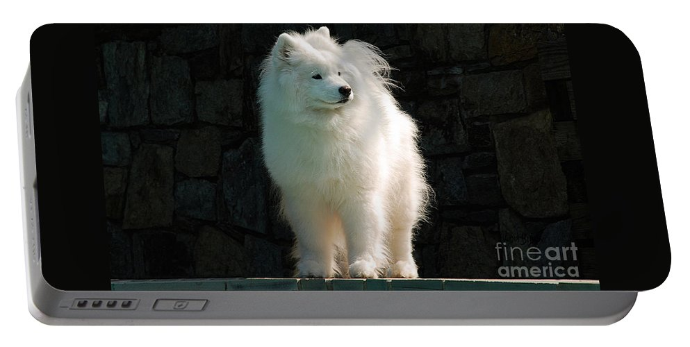 Dog Portable Battery Charger featuring the photograph Intent by Lois Bryan
