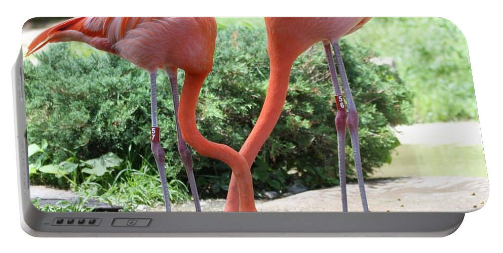 Intertwined Flamingoes Portable Battery Charger featuring the photograph Intertwined Flamingoes by Dan Sproul