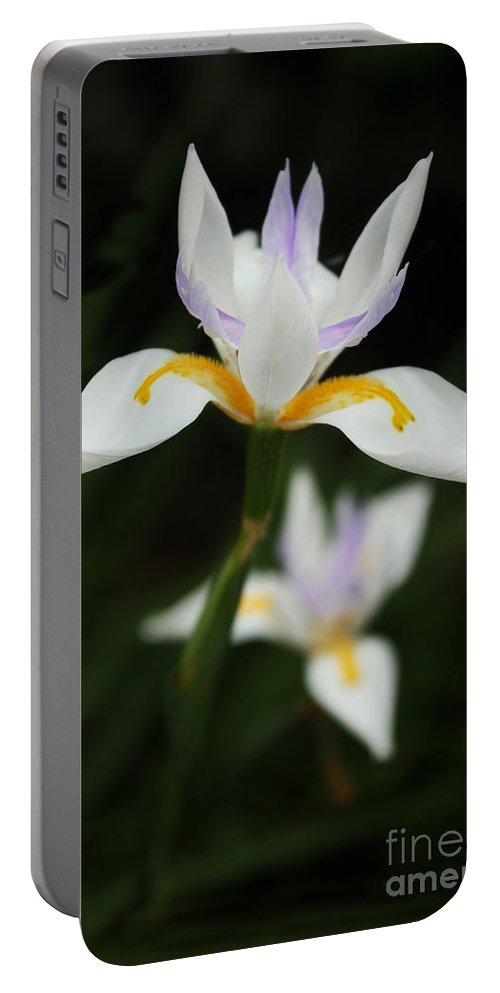 Iris Portable Battery Charger featuring the photograph Iris by Irina Davis