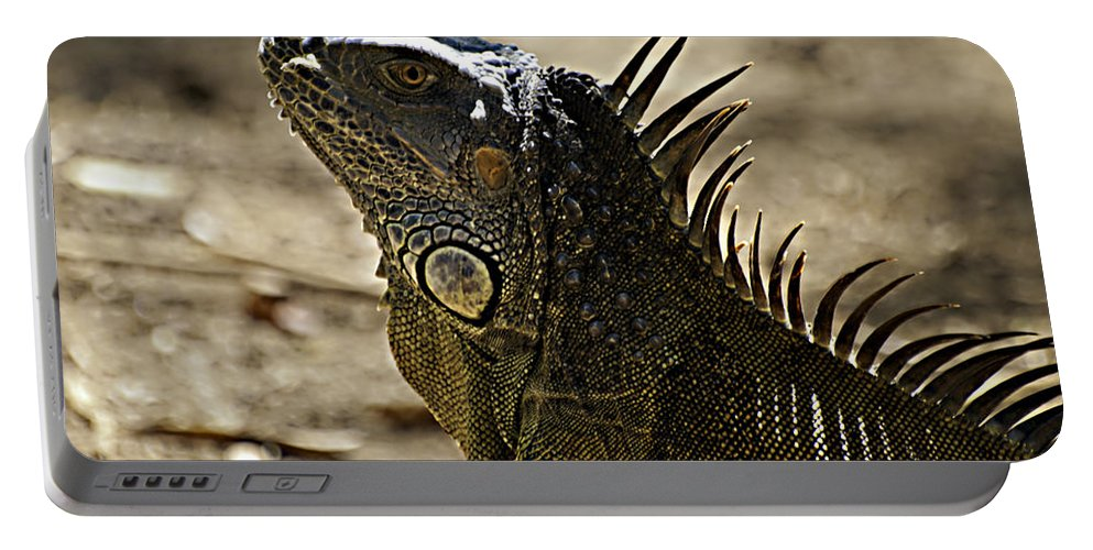 Caribbean Portable Battery Charger featuring the photograph Island Lizards Three by Ken Frischkorn