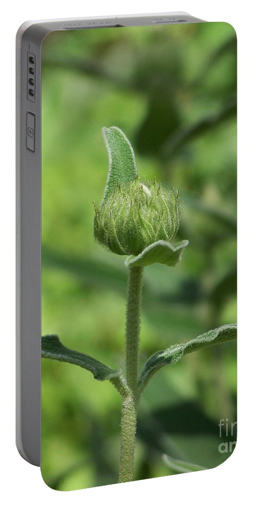 Plants Portable Battery Charger featuring the photograph Its A Green World by Kathy McClure