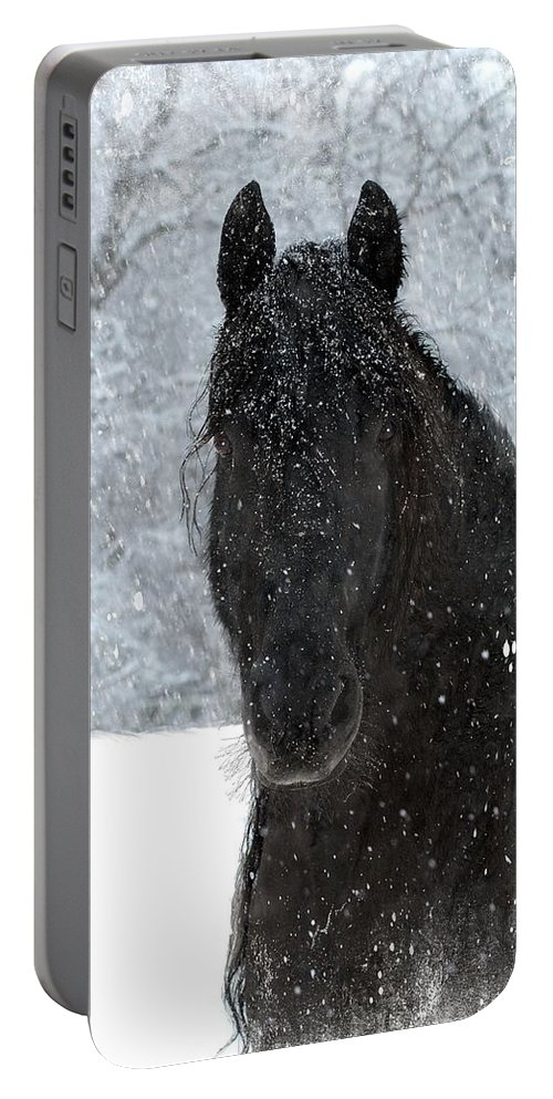 Friesian Horses Portable Battery Charger featuring the photograph It's Friesian out here by Fran J Scott