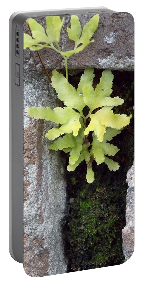 Wall Flower Portable Battery Charger featuring the photograph Its The Little Things In Life by John Glass