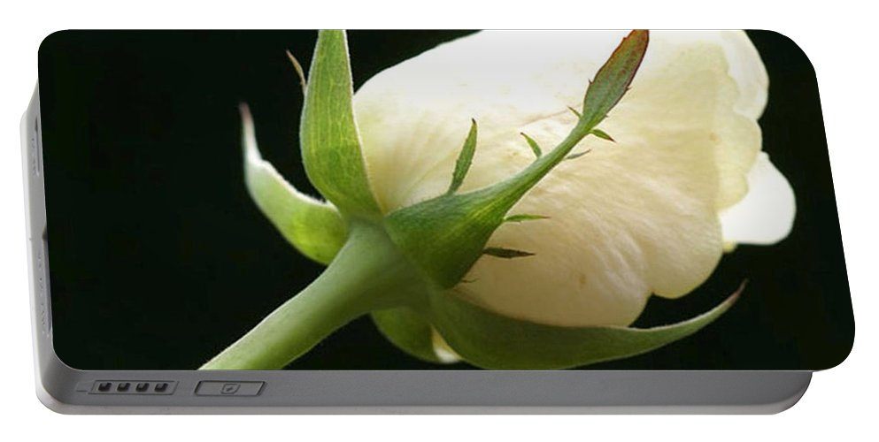 Ivory Portable Battery Charger featuring the photograph Ivory Rose Bud by Carol Lynch