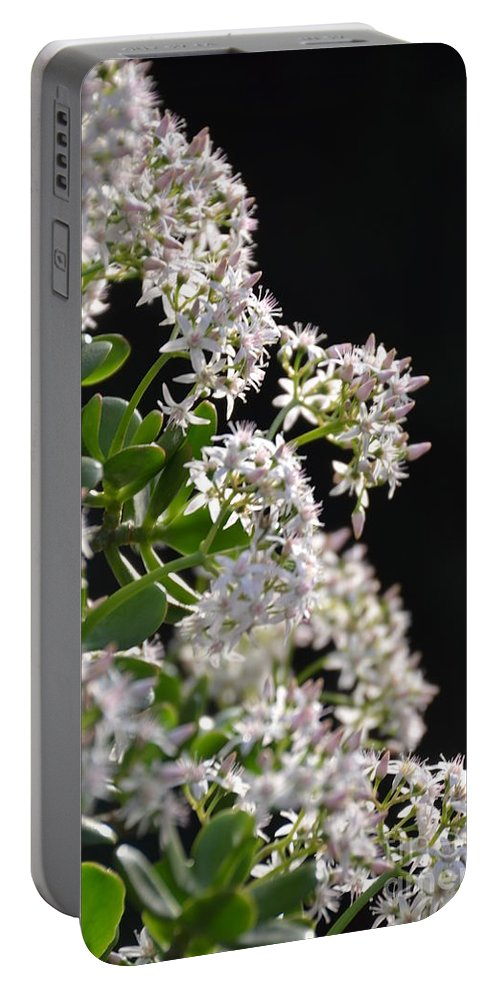 Detroit Portable Battery Charger featuring the photograph Jade Plant Flowers by Randy J Heath