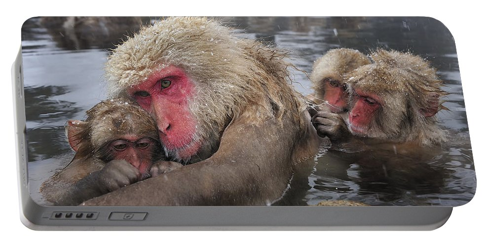 Thomas Marent Portable Battery Charger featuring the photograph Japanese Macaque Grooming Mother by Thomas Marent