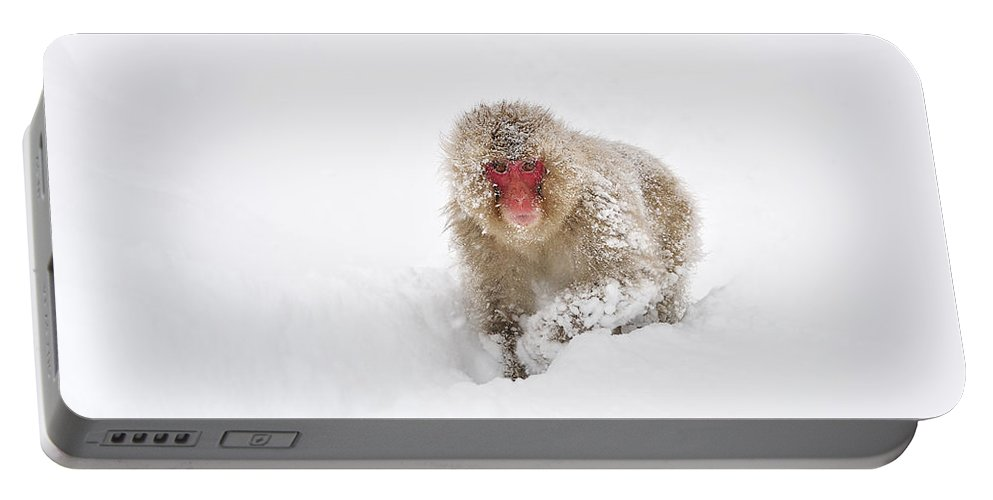 Thomas Marent Portable Battery Charger featuring the photograph Japanese Macaque In Snow Jigokudani by Thomas Marent
