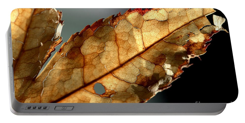 Brown Portable Battery Charger featuring the photograph Japanese Maple Leaf Brown - 4 by Kenny Glotfelty
