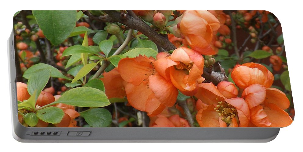 Shrub Portable Battery Charger featuring the photograph Japanese Quiche Blossoms by Brenda Brown