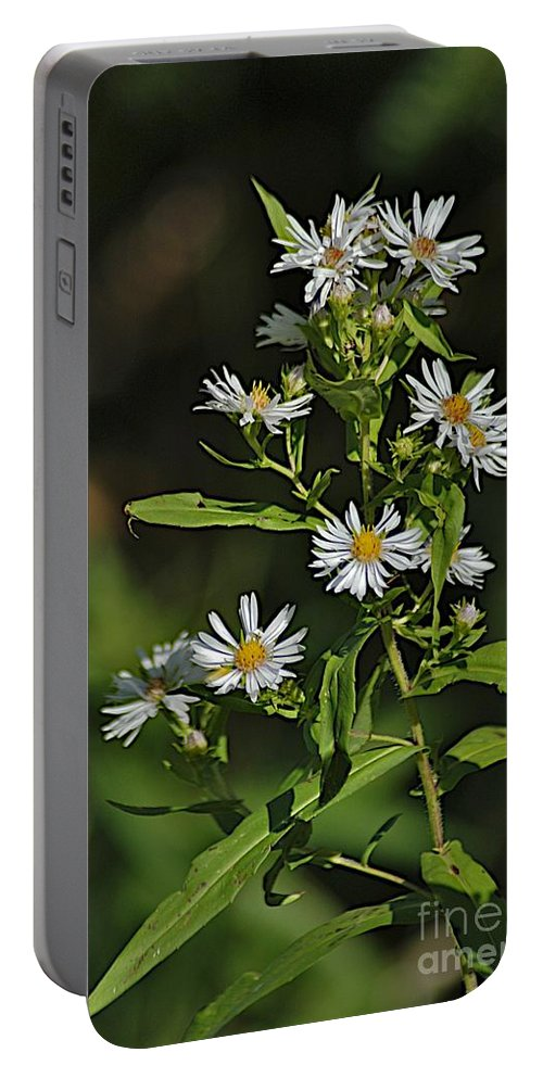 Daisy Portable Battery Charger featuring the photograph Jordan Camp by Joseph Yarbrough