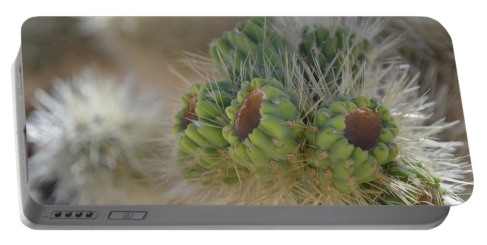 Joshua Tree Portable Battery Charger featuring the photograph Joshua Tree Cholla Cactus by Christine Owens