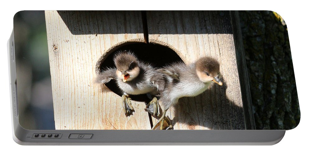 Wood Duck Portable Battery Charger featuring the photograph Jump Day by Lori Tordsen