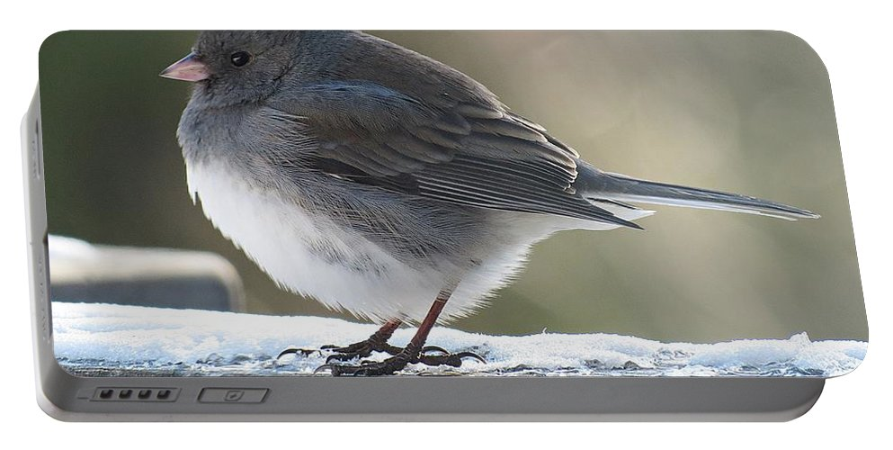 Junco Portable Battery Charger featuring the photograph Junco On Board by MTBobbins Photography
