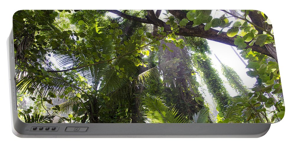 Hawaii Portable Battery Charger featuring the photograph Jungle Canopy by Daniel Murphy