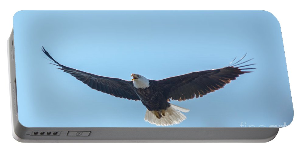 Eagle Portable Battery Charger featuring the photograph Just Above The Trees by Cheryl Baxter