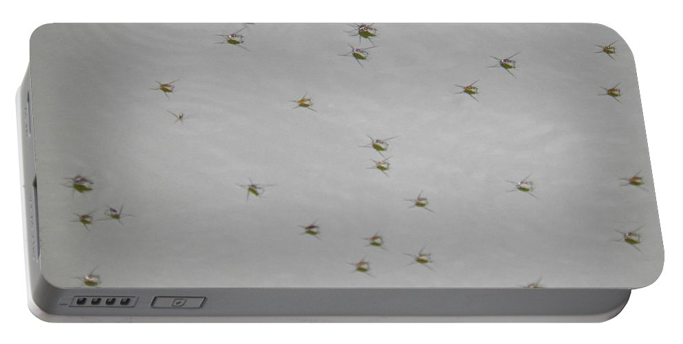 Insects Portable Battery Charger featuring the photograph Just Floating by Nick Kirby