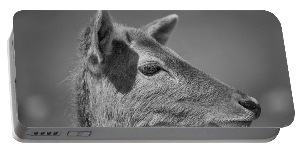Deer Portable Battery Charger featuring the photograph Juvenile Deer Close-up V2 by Douglas Barnard