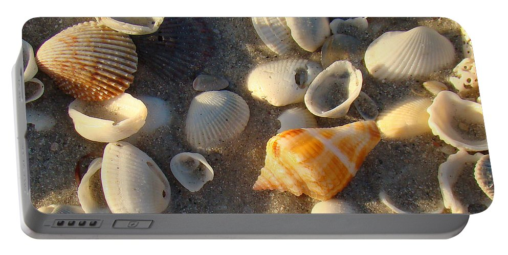Conch Portable Battery Charger featuring the photograph Juvenile Florida Fighting Conch by Nancy L Marshall