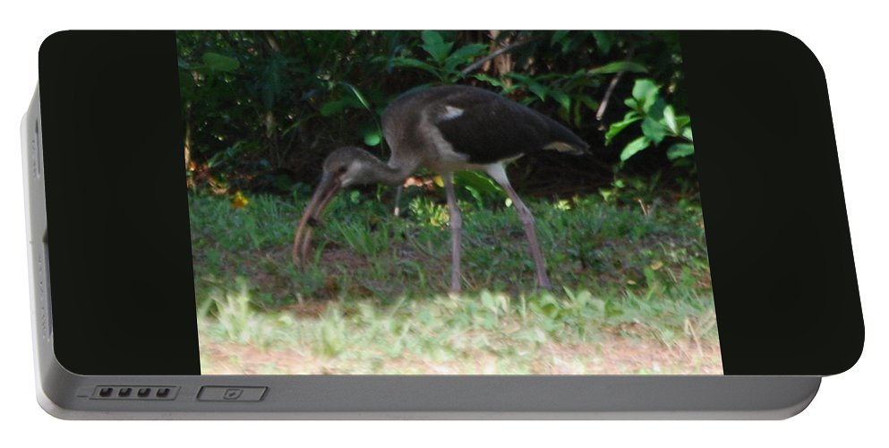 Gotch Ya.suncoast Exterminator Portable Battery Charger featuring the photograph Juvenile White Ibis by Robert Floyd